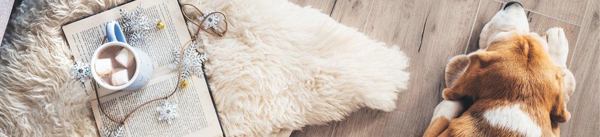Sélection de canapés de luxe et gamelles design pour chiens
